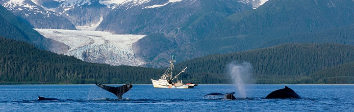 Juneau-work and travel-пътувания-китове